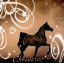 Photo de Cheval2107