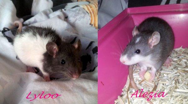 Mes bébés . ♥
