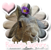 Photo de Rabbits-Saphire