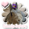 Rabbits-Saphire
