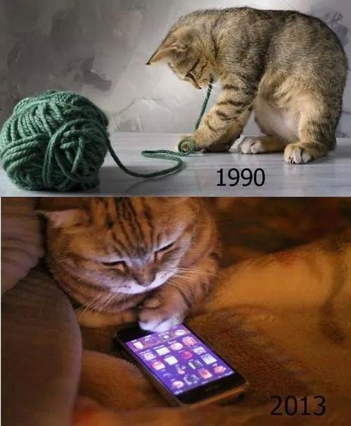 chat moderne
