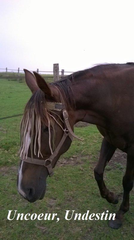 Trois nouveaux chevaux à adopter :)