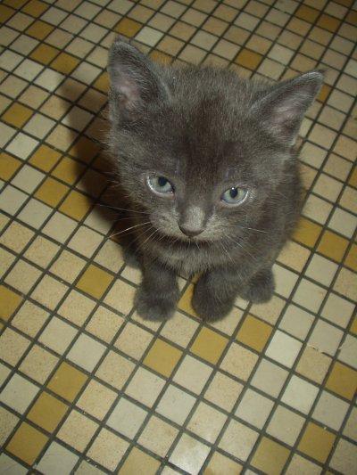 Voici le premier petit chat, il a entamer une vrai carriere de chanteur !