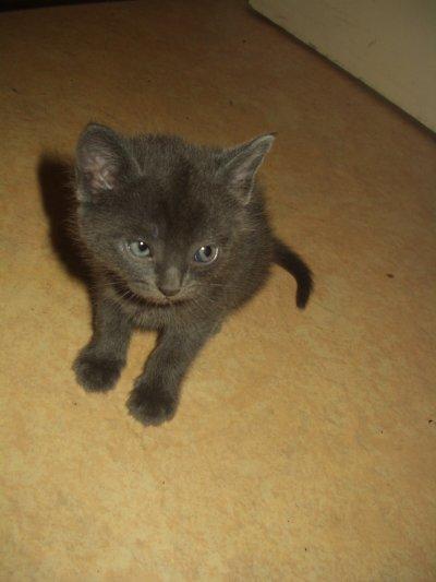 Voici la deuxieme petite chatte, une vrai petite rapide !