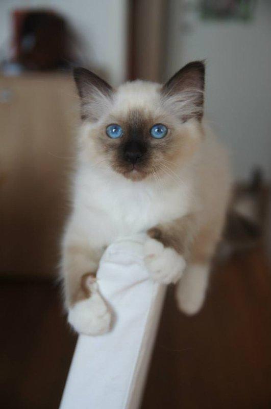 Les chatons réservés