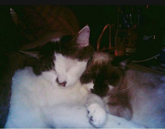 Lilith et Castiel mes amours