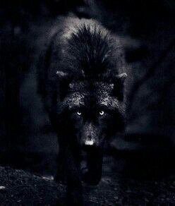 Mes merveilleux loups