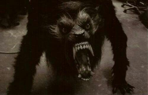 Loups-Garous:un monstre pas si fictif!