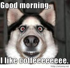 Bon matin les Fous
