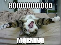 Bonne matinée à tous !