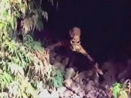 De vrais Extraterrestres photographiés ?