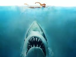 Mes Requins