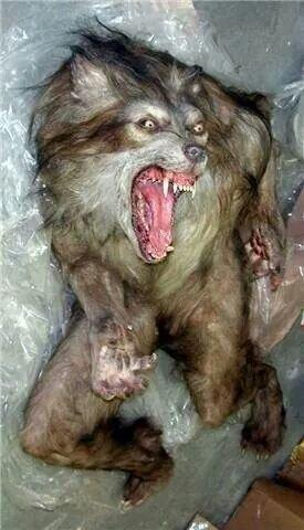return of werewolves