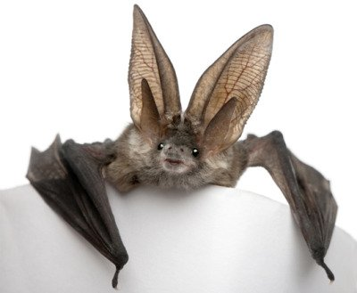 Bats Love