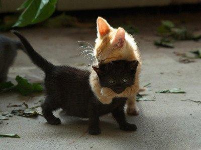 lovin' Animals