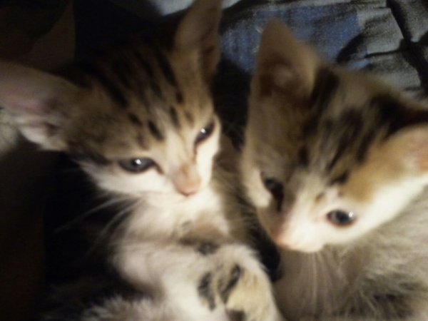 les chats & Akasha