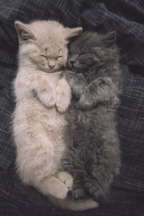 Pour tous les amoureux des chats