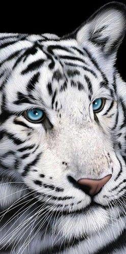 Wild Beauty 2