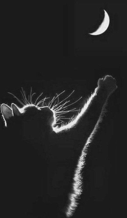 Hommage à nos amis les chats;)