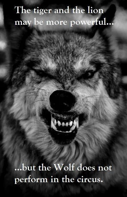 Parole de loup