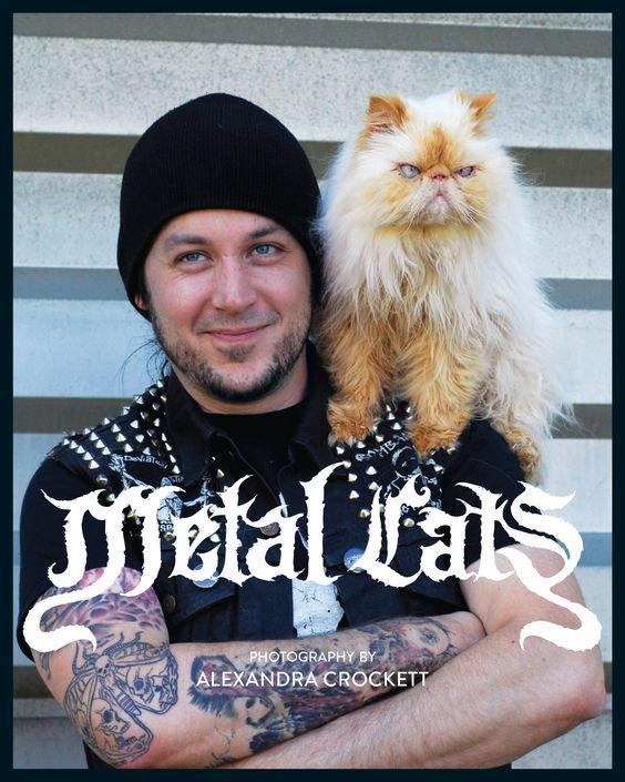 Métal Cats!