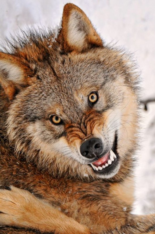 Wolves Part3