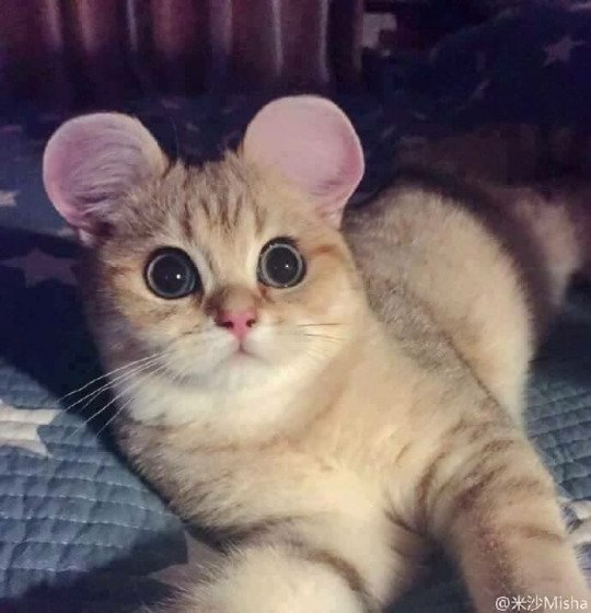 Nouvelle création loufoque Nipponne:Le Chat-Souris (et non Chauves-Souris)!!!! WTF!!!