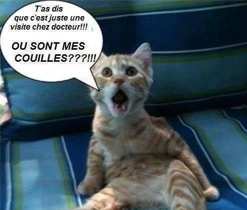 Chat Alors;)