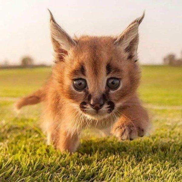 Comment pourrais t'on faire du mal à ces adorables et innocentes créatures?!
