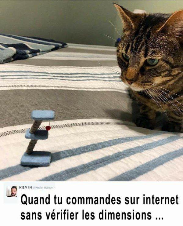 N'oublions pas la petite touche d'humour!:) (de l'humour qui est drôle en l'occurence!!! NDLR):)