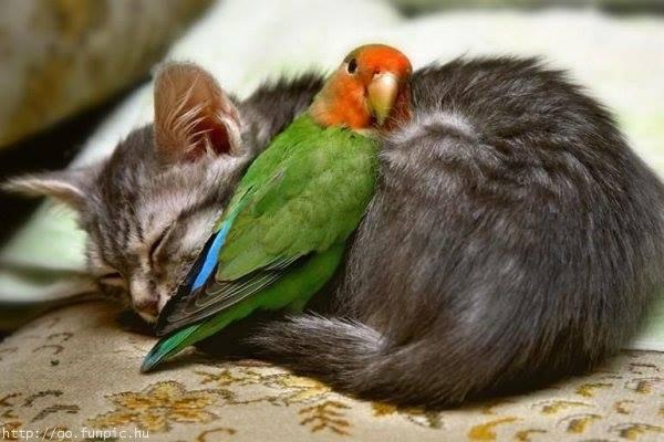 Amitié Animale:Prenons exemple sur eux:)