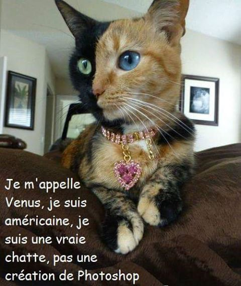 Vive les Chats!