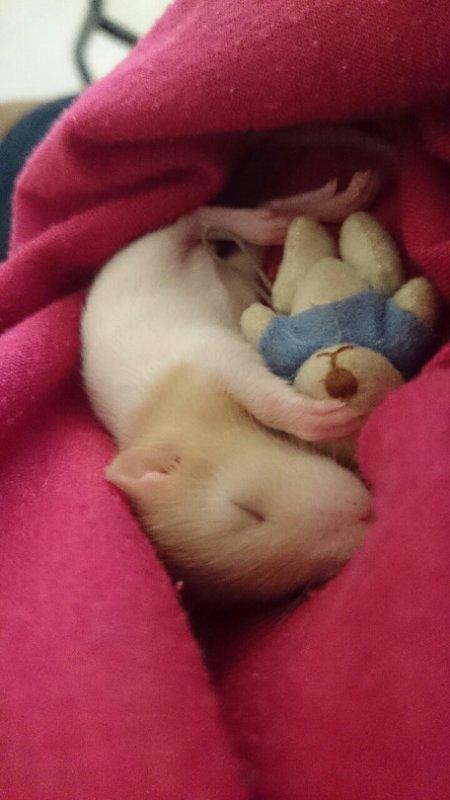 J'adore les Rats!!!