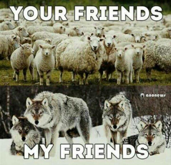 My Friends;)