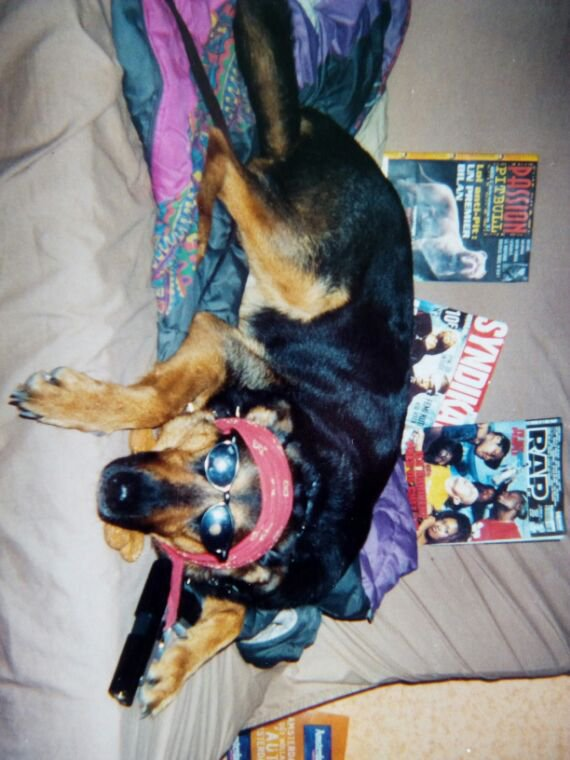 Memories Part 3: Ma chienne la thug