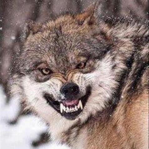 Le Grand Méchant Loup
