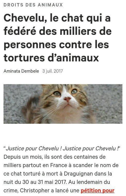 Chevelu, le chat qui a fédéré des milliers de personnes contre les tortures d'animaux · Change.org