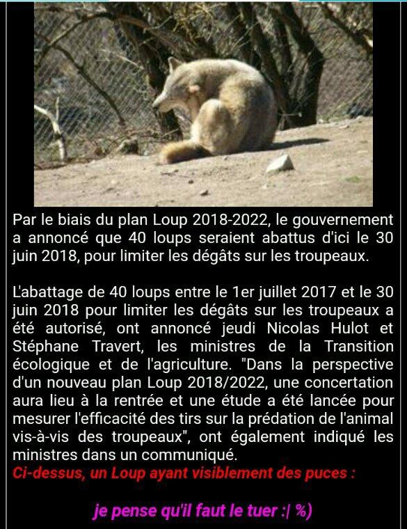 SCANDALEUX !!!40 loups seront abattus d'ici 2018!!!