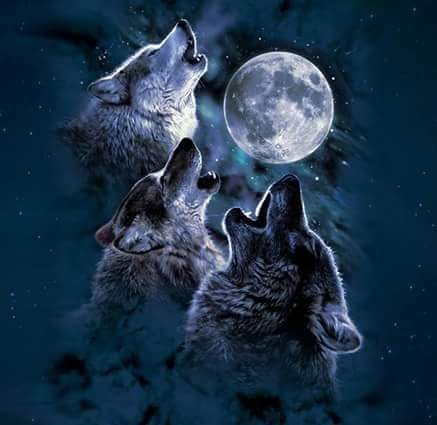 Wolf in my Blood (Pour ma meute)