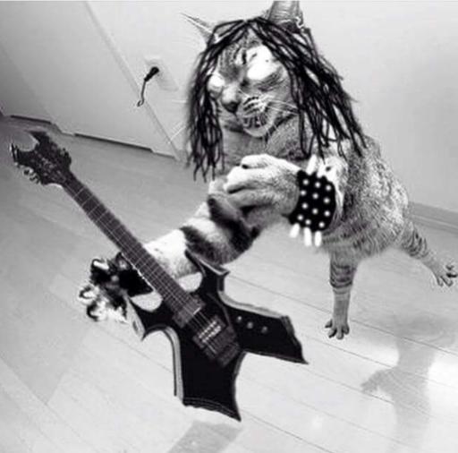 Métal Cat