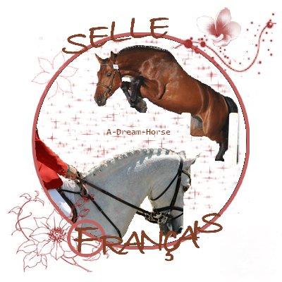 Le Selle français, notre cheval de sport national