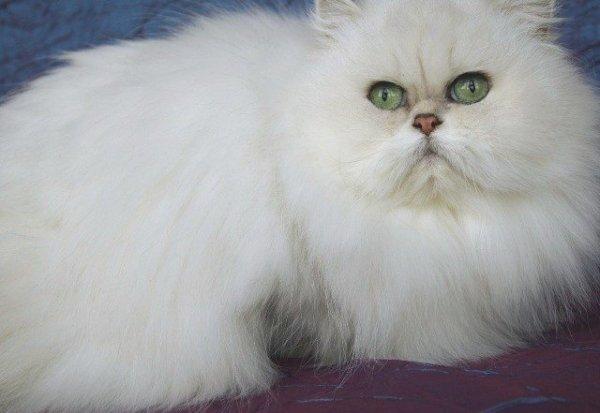 Ma Taormina est au paradis des chats