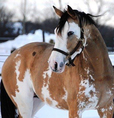 La lecon du jour : la complicité entre le cheval et l homme