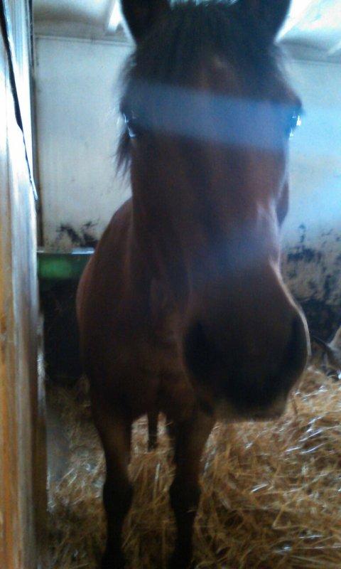 LA semaine dernière (équitation)