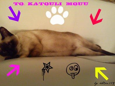 My cat!!