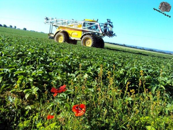 Traitement des pommes de terre 2011