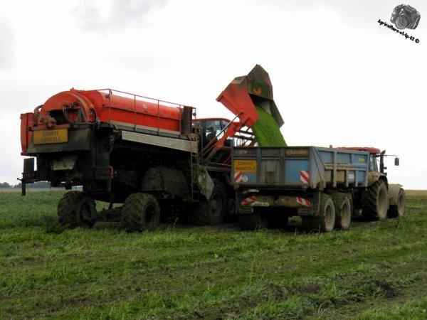Récolte des pois 2011