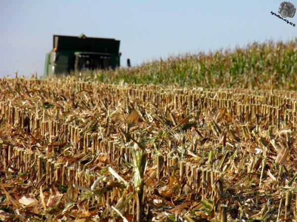 Moisson du maïs 2011