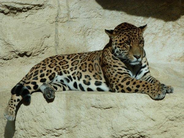 journée au zoo de La Palmyre