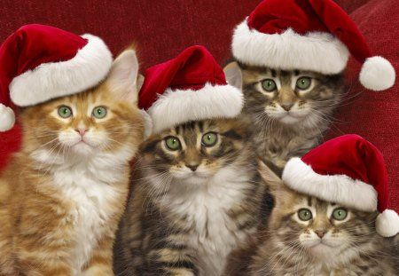 Joyeux Noel et de Bonnes Fêtes de fin d année à tous ^ ^